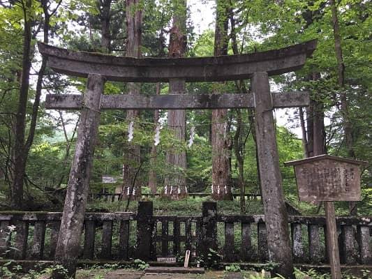 御神木の三本杉の画像